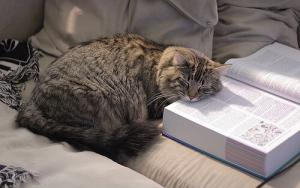 study long hours cat